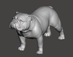 englishbulldog English Bulldog 3D Model