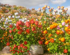 3D model Rose flower 6 types