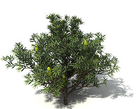 XfrogPlants Saw Banksia 3D