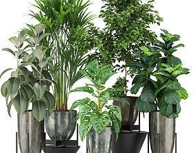 Plants collection 360 3D model