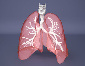 Human Lung with Bronchia - Anatomy Respiratory System 3D