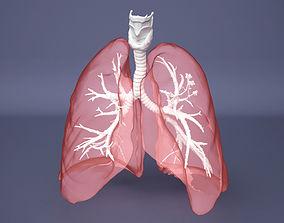 3D model Human Lung with Bronchia - Anatomy Respiratory