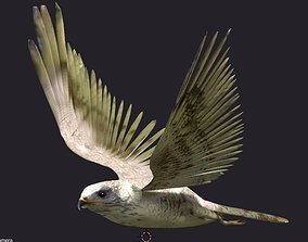 3D model hawk animated
