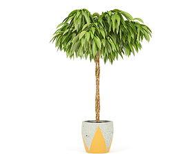 3D Ficus Amstel King Braid