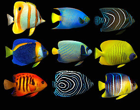 Fish Megapack A Lowpoly 3D model