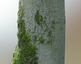 3D asset Mossy Beech Tree Trunk