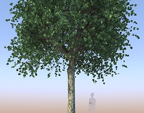 Maple tree acer mature A 3D model