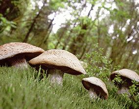 Mushrooms in Forrest 3D asset
