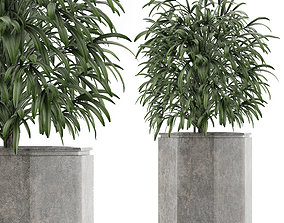 Single Plant 04 3D model