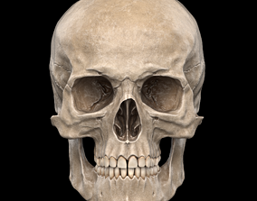 game 3D model low-poly Human Skull