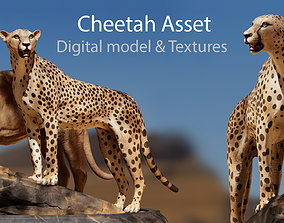 low-poly Cheetah Asset - Digital Model and Textures