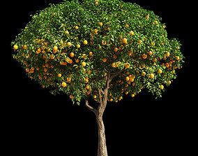 3D model Orange Tree 13