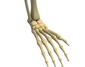 Animal Skeletal Femur 3D bones