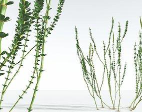 EVERYPlant Hollow-Stemmed Sphenophyllum 03 --16 Models--