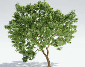 3D Generic tree