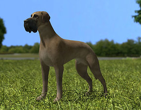 Great Dane 3D