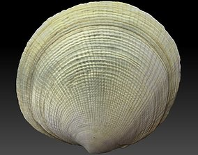 3D model Big Sea Shell Scan