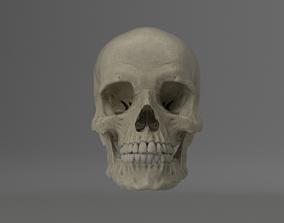 3D asset rigged Skull