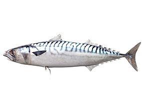Mackerel Fish 3D