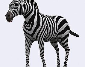 3DRT - Zebra animated
