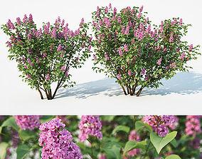 Lilac Syringa vulgaris Nr2 Two sizes 3D