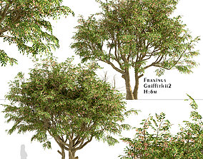 Set of Fraxinus Griffithii or Griffiths ash 3D model 3