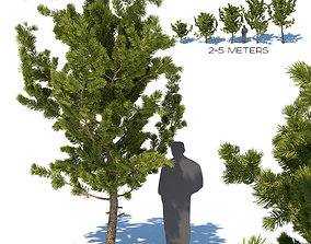 3D model Young pines