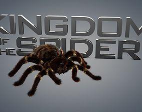 Spider tarantula 3D animated