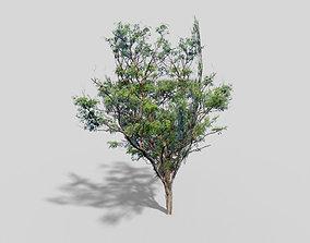 Tree 3D asset