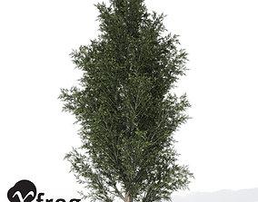 XfrogPlants Common Juniper 3D model