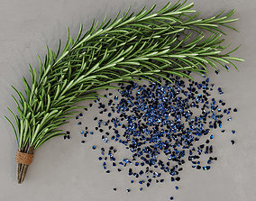 kitchen 3D Rosemary Plants Set