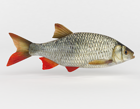 Rudd Fish 3D model