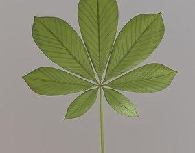 Chestnut Leaf High-Poly 3D model