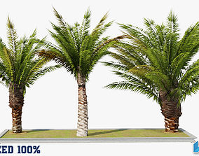 3D asset Small Palm Trees Optimized