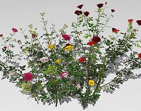 6 rose bushes 3D model