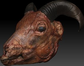 3D Skinned Sheeps Head High Detail Scan With Texture