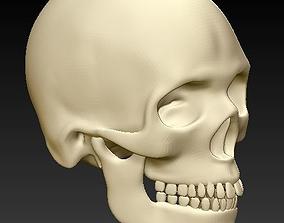 Human skull 3D print model bone