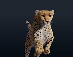 Cheetah Animated Fur 3D model