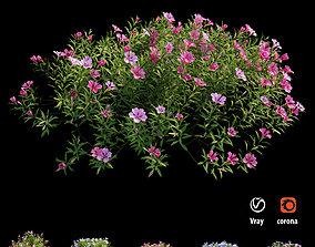 Plant Flower set 17 3D