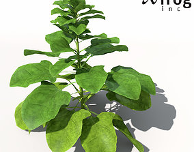 XfrogPlants Spinach food 3D model