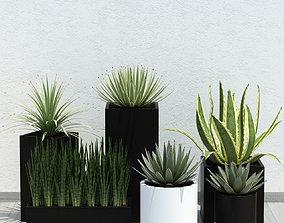 Plants collection 14 3D