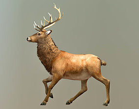 3D asset Reindeer