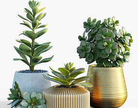 Plants collection 09 3D model