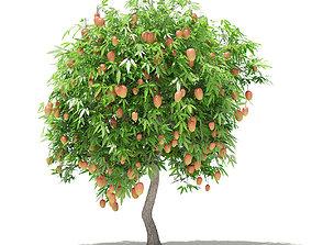 fruit 3D Mango Tree with Fruits