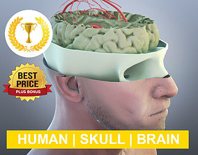 skull Anatomy 3D model PLUS BONUS