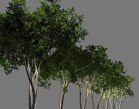 Deciduous tree 3D model low-poly