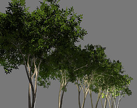 realtime Deciduous tree 3D model