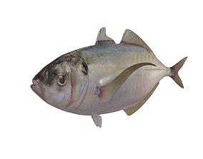 3D model Pacific Bumper Fish