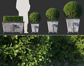 Boxwood in RH Estate Zinc Ring Square Planters 3D model