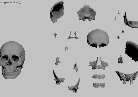 Skull Prinable highpoly model